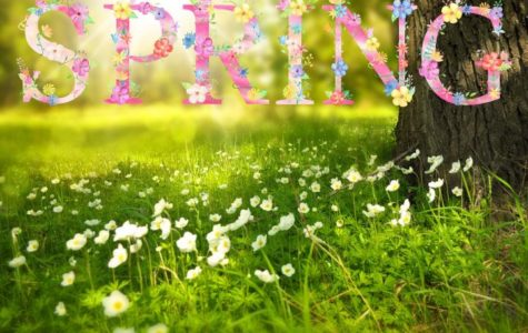 What is Your Favorite Thing About Spring?